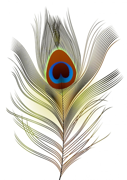 Realistick peacock feather on white background. Premium Vector