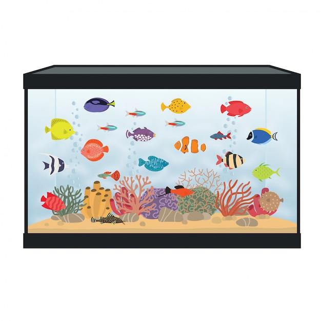 Rectangular aquarium with colorful fish Premium Vector