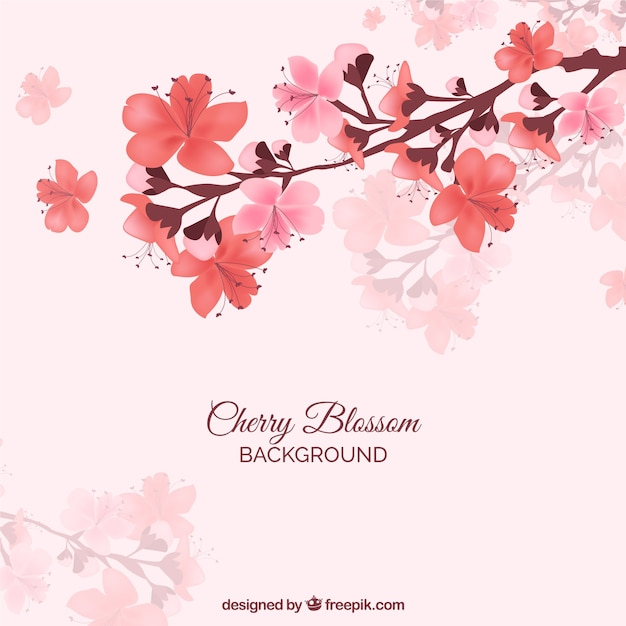 Red cherry blossom background Free Vector