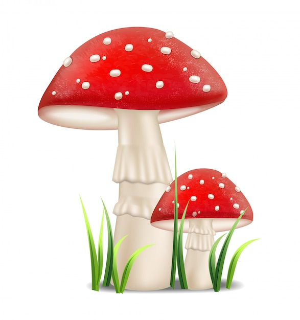 Red mushrooms Premium Vector