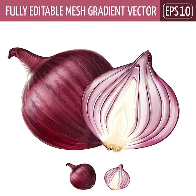 Red onion illustration on white | Premium Vector