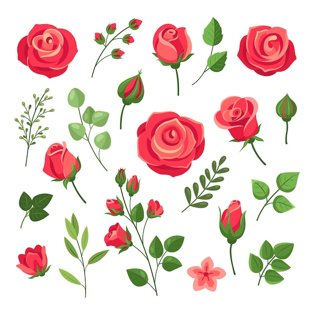 빨간 장미. 녹색 잎과 꽃 봉오리와 부르고뉴 장미 꽃 꽃다발. 수채화 꽃 로맨틱 장식. 격리 된 만화 세트입니다. 분홍색과 빨간색 피 장미, 분기 꽃 꽃 그림 프리미엄 벡터