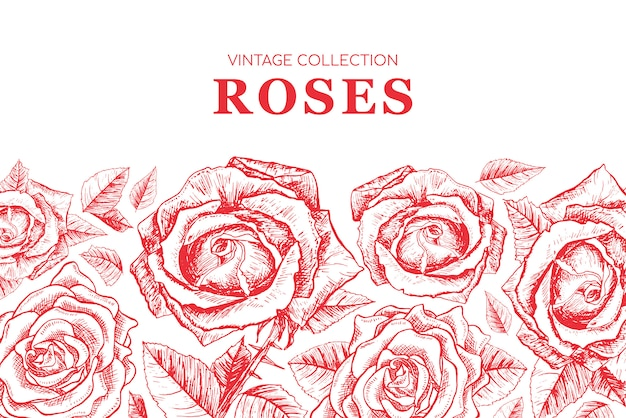 Red roses contour illustration Free Vector