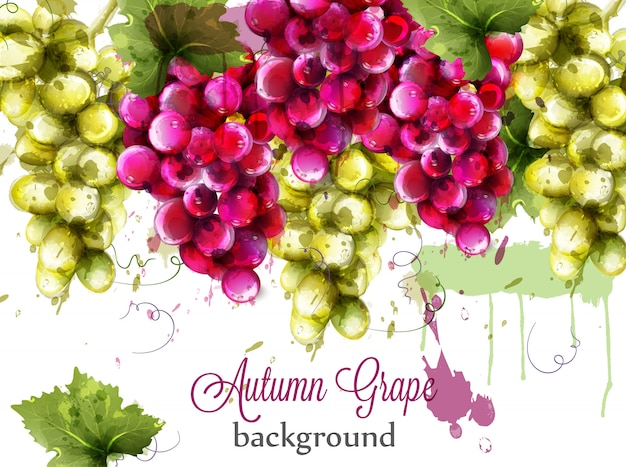 Red and white grapes watercolor card Premium Vector