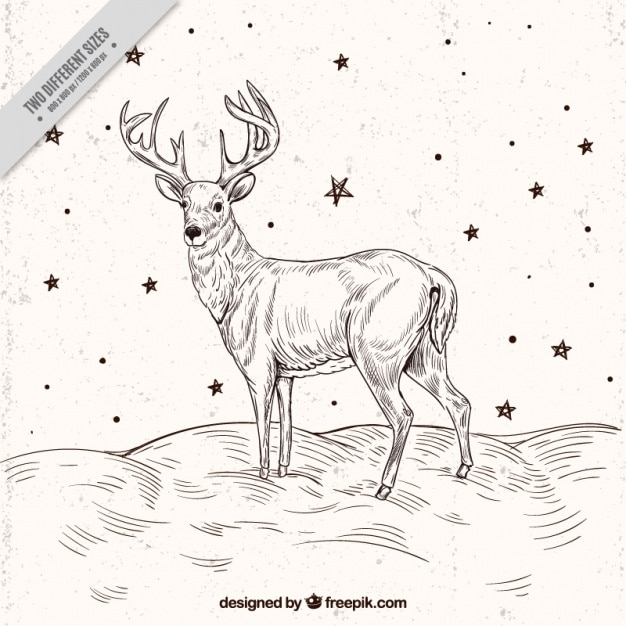 Reindeer sketch background with stars Premium Vector