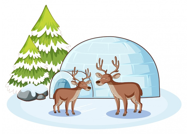 Reindeers and igloo in winter Free Vector