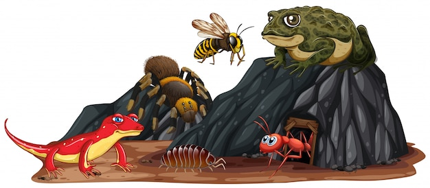Reptile and insect in nature Free Vector