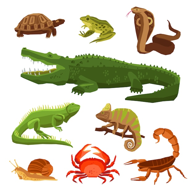 Reptiles and amphibians set Free Vector
