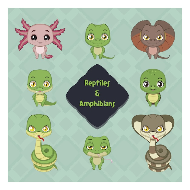 Reptiles and amphibians collection