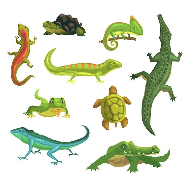 Рептилии и амфибии набор иллюстраций Premium векторы