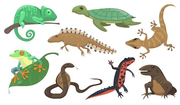 爬虫類と両生類のセット。カメ、トカゲ、トリトン、ヤモリは、シテの背景に分離されました。動物、野生動物、熱帯雨林の動物相の概念のベクトル図 無料ベクター