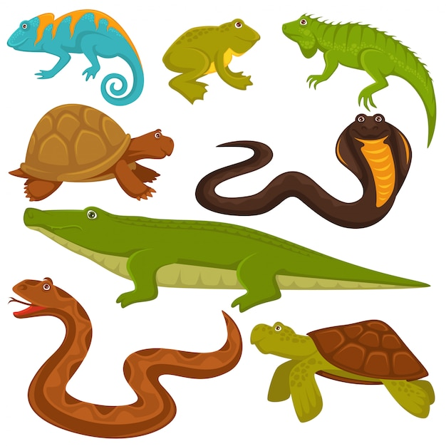 Reptiles and reptilian animals turtle, crocodile or chameleon and lizard snake set Premium Vector