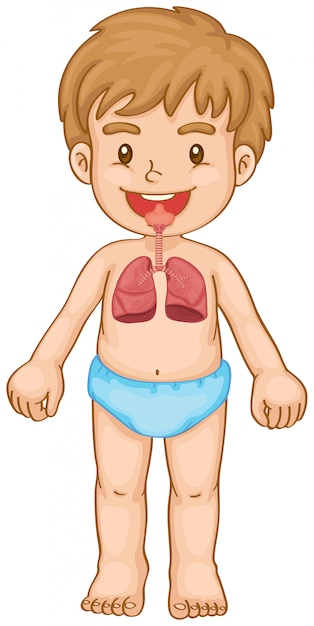Respiratory system in human boy Free Vector