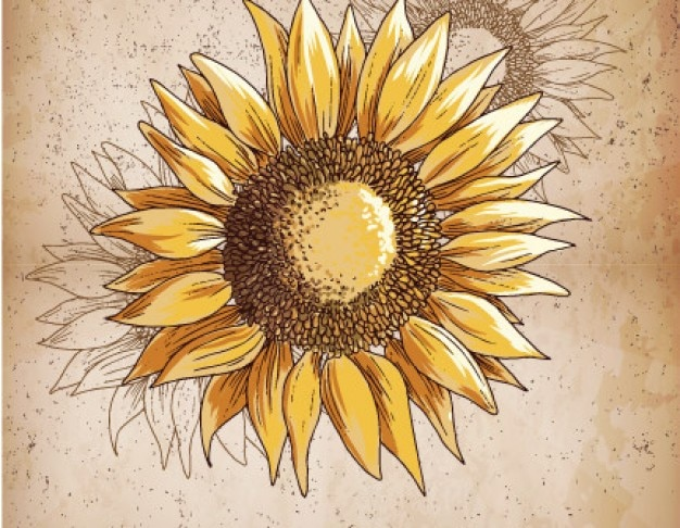 Retro sunflower illustration