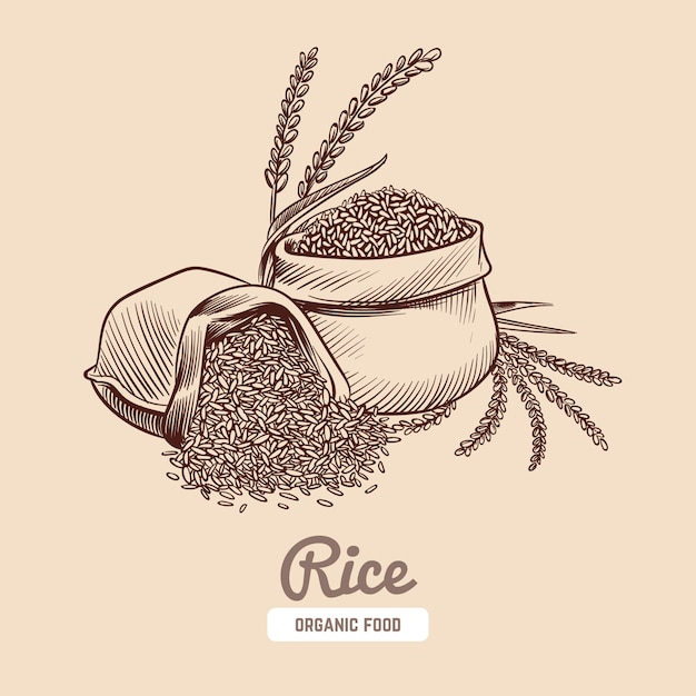 Rice illustration Premium Vector