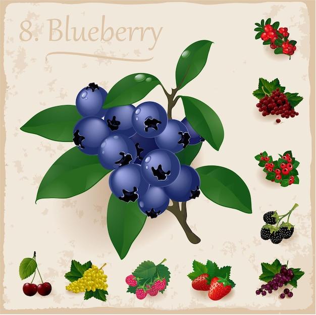 熟した新鮮なブルーベリーと葉。 Premiumベクター