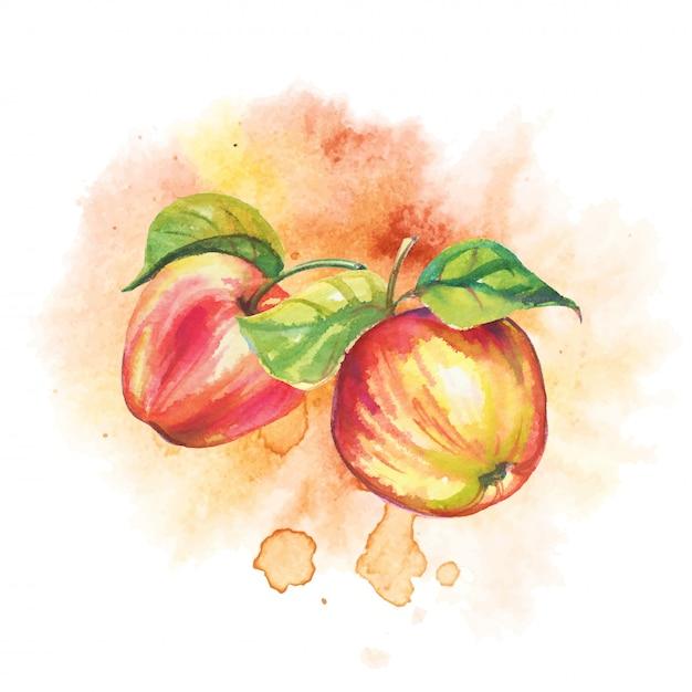 Ripe apples in watercolor Premium Vector