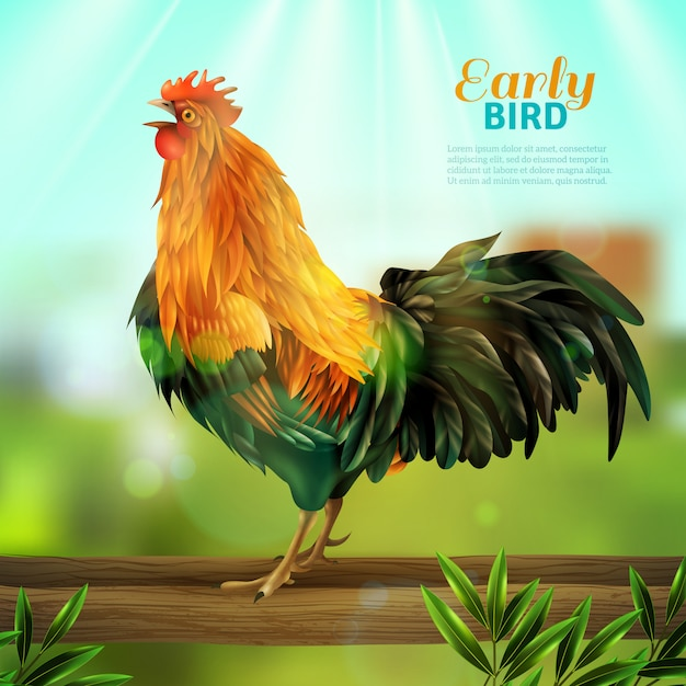 Rooster vector illustration Free Vector