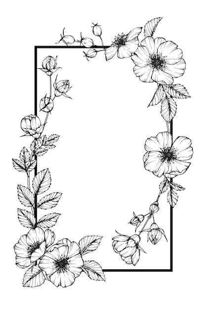 Rose Flower Frame Drawing Illustration For Card Design Premium