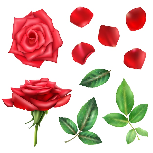 Rose flower and petals set Free Vector