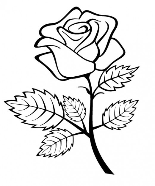 Rose Flower With Branch And Leaves Vector Free Download