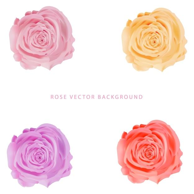 バラの花の分離 Premiumベクター