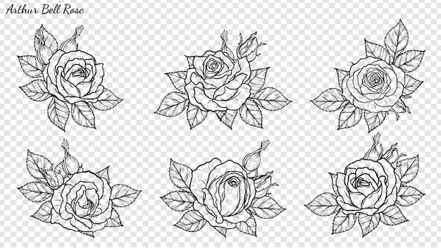 Rose ornament vector by hand drawing Premium Vector