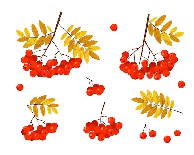 Рябина с красными ягодами и листьями на белом фоне. Premium векторы