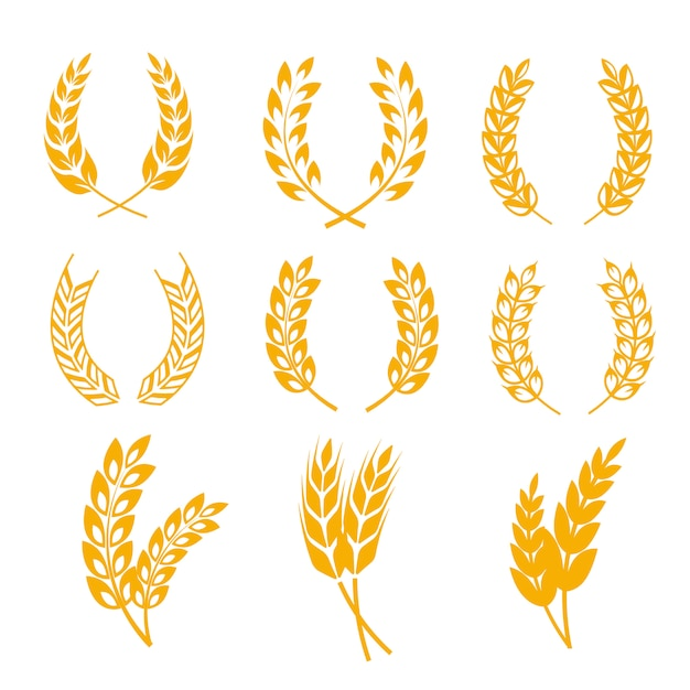 Rye wheat ears wreaths elements Premium Vector