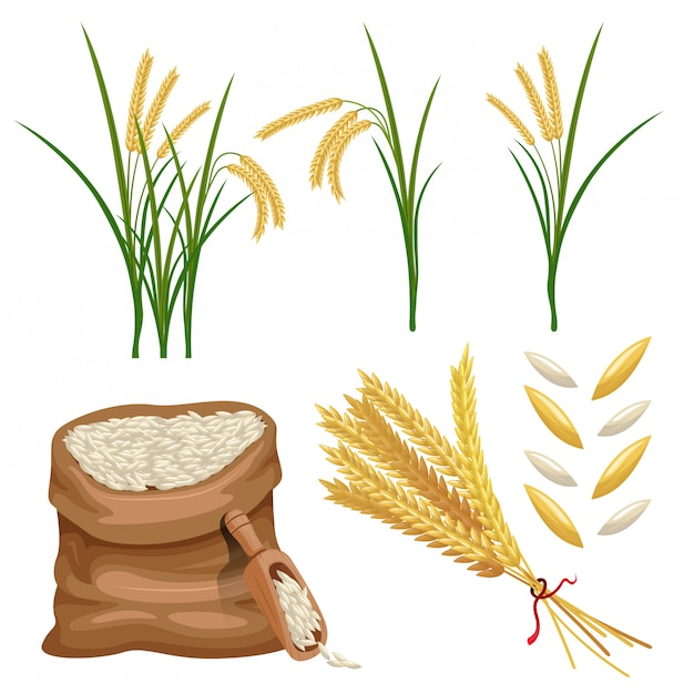 Sack of paddy ears and rice vector set Premium Vector