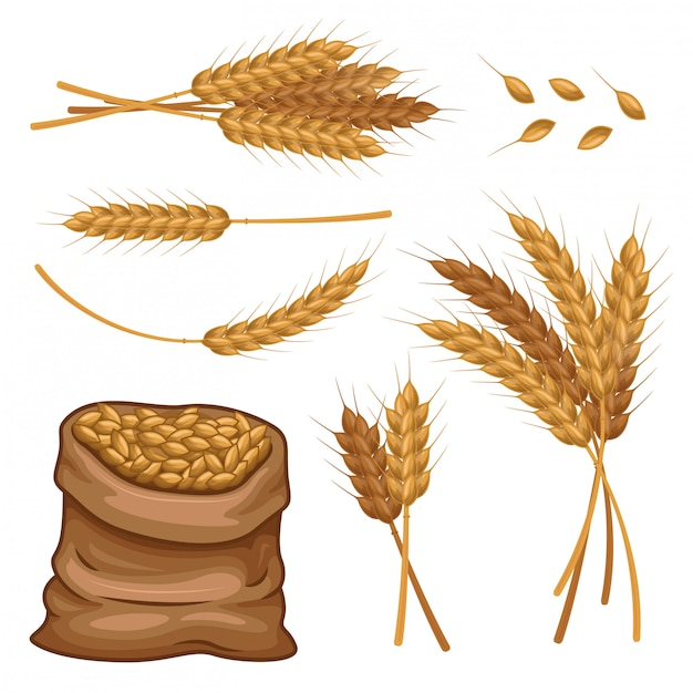 Sack of wheat ears and grains vector set Premium Vector