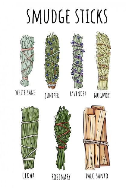 Sage smudge sticks hand-drawn set. herb bundles Premium Vector