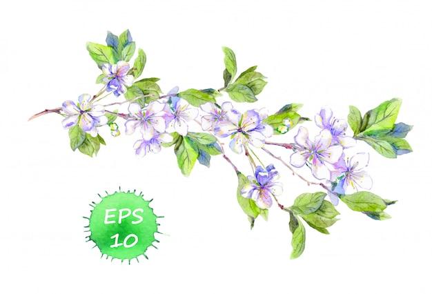 Sakura cherry or apple flower branch. watercolor Premium Vector