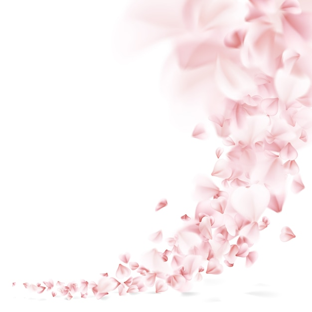 Sakura flying petals. Premium Vector