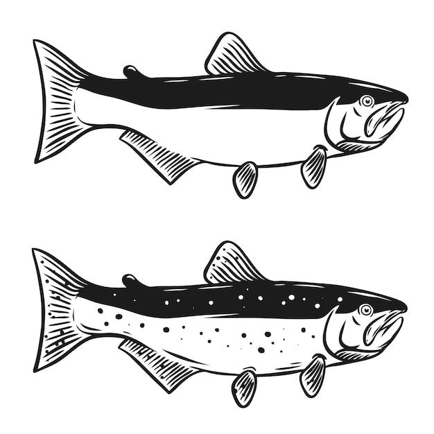 白い背景の上のサケ魚のイラスト。ロゴ、ラベル、エンブレム、記号の要素。図 Premiumベクター