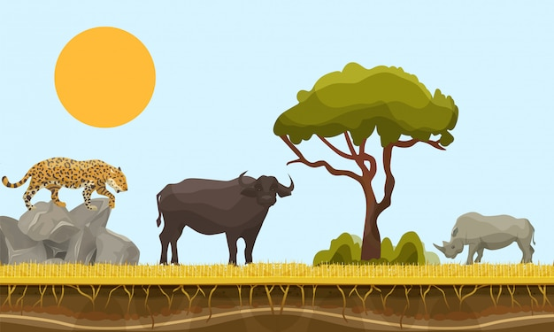 Savannah animals in africa vector landscape with baobab  and under earth surface layer, bull, gepard and rhino. savannah animals illustration. wildlife of africa. Premium Vector