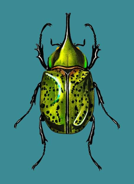 東ヘペルス・ビートル(scarabaeus hyllus) 無料ベクター