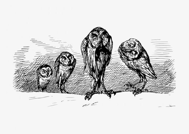 Scary owls vintage drawing Free Vector