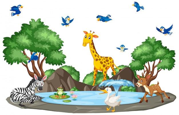 野生動物と池のシーン Premiumベクター