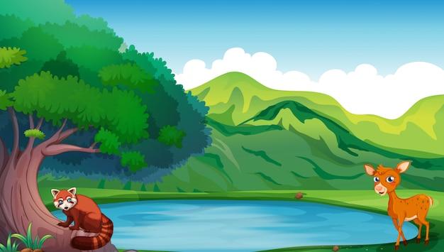 池で鹿と赤いパンダの場面 Premiumベクター