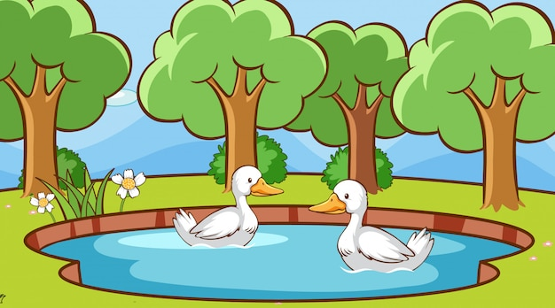 Scene with ducks in the pond Free Vector