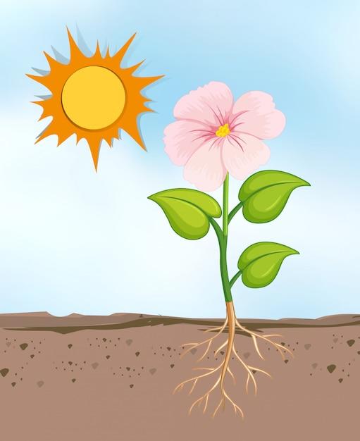 Scena con la crescita di fiori nel luminoso giorno soleggiato Vettore gratuito