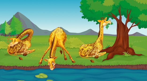 Scene with giraffes drinking water from river Free Vector