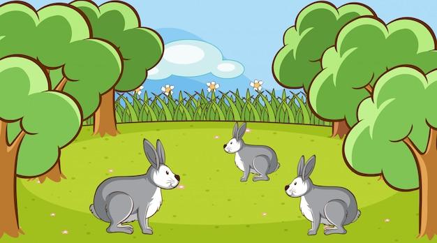 フォレスト内の灰色のウサギとのシーン 無料ベクター