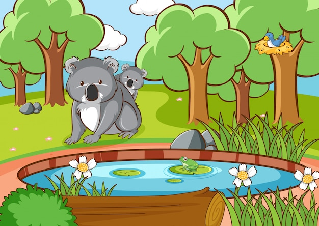 Scene with koala in the forest Free Vector