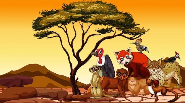 Сцена со многими африканскими животными на суше Бесплатные векторы