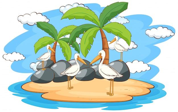 島のペリカン鳥とのシーン 無料ベクター