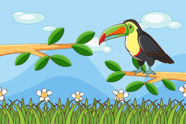 Scene with toucan bird on branch Free Vector