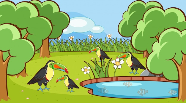 Scene with toucan birds in the park Free Vector