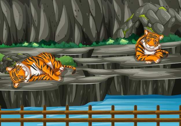 Scene with two tigers in the zoo Free Vector